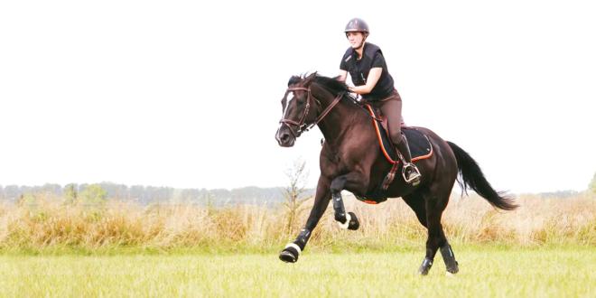 capteur pour cheval equisense motion s