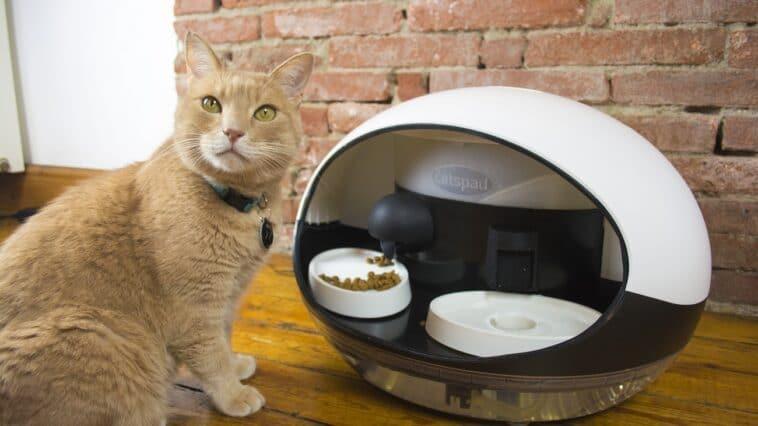 un chat à côté du catspad, le distributeur connecté de croquettes et d'eau