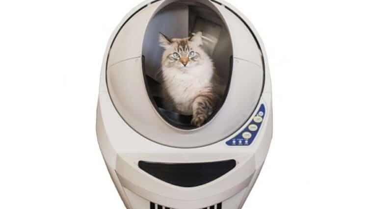 litière robot chat