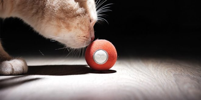 Cheerble Board Game, joeut pour chat